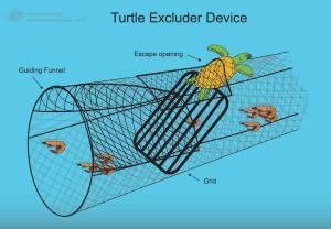 turtle excluder