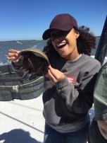 Horseshoe crab wrangler 2
